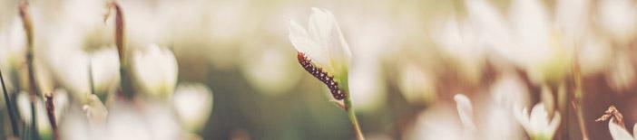 startpic: Foto einer Raupe